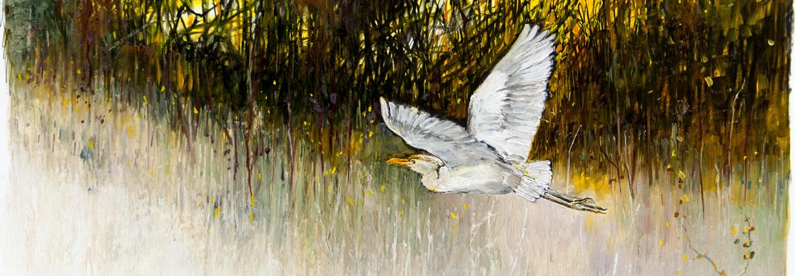 Afrika - egret